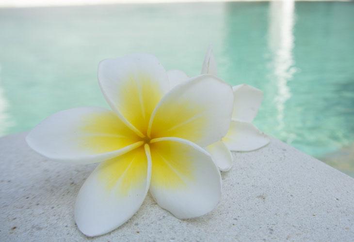 Villa Harmony, bazen i spa